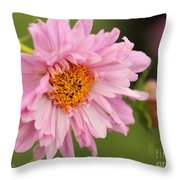 Double Click Cosmos Named Rose Bonbon Throw Pillow
