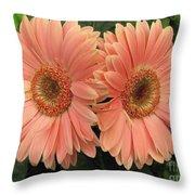 Double Delight - Coral Gerbera Daisies Throw Pillow