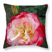 Double Delight Hybrid Tea Rose Throw Pillow