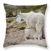Double The Fun Throw Pillow