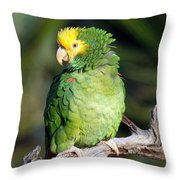 Double Yellow Headed Parrot Throw Pillow