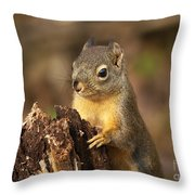 Douglas Squirrel On Stump Throw Pillow