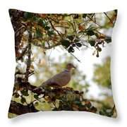 Dove In Autumn Oak Tree Lower Lake Ca Throw Pillow
