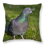 Dove Throw Pillow