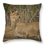 Down By The Duck Pond Throw Pillow