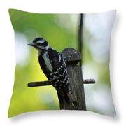 Downy Woodpecker 7448 Throw Pillow