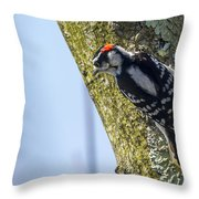 Downy Woodpecker - Male Throw Pillow