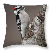 Downy Woodpecker Pictures 11 Throw Pillow