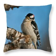 Downy Woodpecker Pictures 23 Throw Pillow