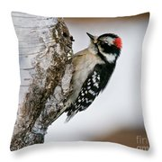Downy Woodpecker Pictures 26 Throw Pillow