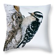 Downy Woodpecker Pictures 27 Throw Pillow