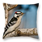 Downy Woodpecker Pictures 34 Throw Pillow