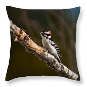 Downy Woodpecker Pictures 36 Throw Pillow