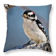Downy Woodpecker Pictures 39 Throw Pillow
