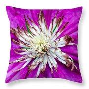 Dr. Seuss Flower  No. 1569 Throw Pillow