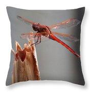 Dragon Fly- Br Throw Pillow