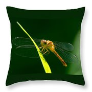 Dragon Fly On Grass Throw Pillow