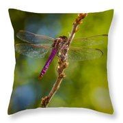 Dragon Fly Or Not Throw Pillow