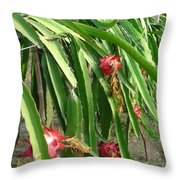 Dragon Fruit Tree Throw Pillow