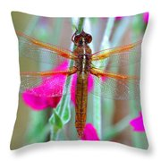 Dragon Wings Throw Pillow