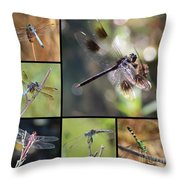 Dragonflies On Twigs Collage Throw Pillow