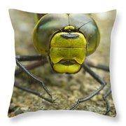 Dragonfly Close-up Throw Pillow