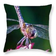Dragonfly Close Up Throw Pillow