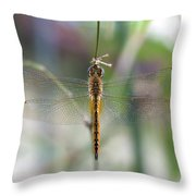 Dragonfly Closeup Throw Pillow