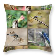 Dragonfly Collage 3 Throw Pillow