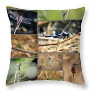 Dragonfly Collage Throw Pillow by Carol Groenen