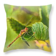 Dragonfly Days II Throw Pillow