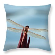Dragonfly Days Throw Pillow