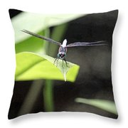 Dragonfly Dimensions Throw Pillow