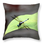 Dragonfly Dimernsions II Throw Pillow