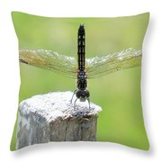 Dragonfly Doing A Handstand Throw Pillow