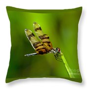 Dragonfly Eating Throw Pillow