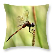 Dragonfly Gold Throw Pillow