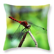 Dragonfly Hard At Work Throw Pillow