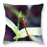 Dragonfly Hunt Throw Pillow