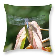Dragonfly In Early Autumn Throw Pillow