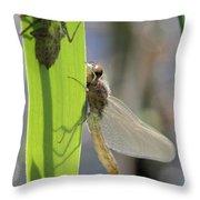 Dragonfly Metamorphosis - Eighth In Series Throw Pillow