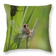 Dragonfly Metamorphosis - Eleventh In Series Throw Pillow