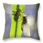 Dragonfly Metamorphosis - Fifth In Series Throw Pillow