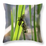 Dragonfly Metamorphosis - First In Series Throw Pillow