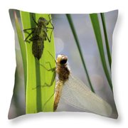 Dragonfly Metamorphosis - Seventh In Series Throw Pillow