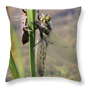 Dragonfly Newly Emerged - First In Series Throw Pillow