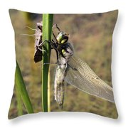 Dragonfly Newly Emerged - Second In Series Throw Pillow