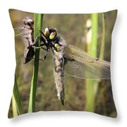 Dragonfly Newly Emerged - Third In Series Throw Pillow