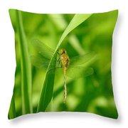 Dragonfly On A Grass Stem Throw Pillow