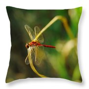 Dragonfly On A Summer Day Throw Pillow